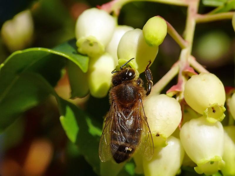 Quelques insectes sympathiques ... 2235264199_242cd4b158_o