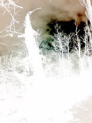 Dark Sky (yusuf_alioglu) Tags: world pictures wood winter sky white tree forest turkey dark photo leaf war flickr peace shot photos earth no trkiye picture free ivy vine plate dry negative minus hatta negatif gkyz aa k orman yaprak laik yusufyusuf85