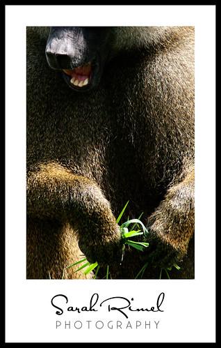 web zoo 06