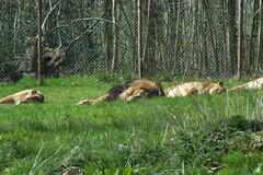 Longleat Safari Park #49