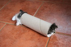 sausage kitten (*LINNY *) Tags: cat fun kitten tube kittens