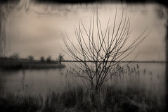 Another Lonely Tree (crowt59) Tags: bw white lake black tree nikon ray texas lonely hubbard d300 potofgold naturesfinest getrdun crowt59 eliteimage 1685vriizoom
