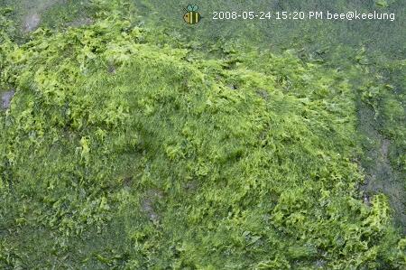 20080524基隆和平島公園玩耍 (5)