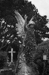 Angel (Mister Oy) Tags: angel statue memorial gravestone mono monochrome blackandwhite bw film 35mm voigtlander bessa r3m ilfordhp5 homedeveloped id11 kodal religion cemetery graveyard