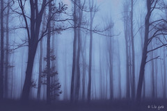 Mystical forest in the Bakony (www.instagram.com/lizfoto_le_foto_di_liza) Tags: nature naturelovers winter february foggy fog deep forest landscape lover hungary bakony canon photography naturephotography landscapephotography mystic mystical love europe beautiful awesome lízfotó tree trees