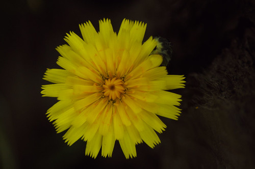 200905161667 flower works 2