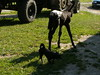 fohlen-boderitz-011 (pischty.hufnagel) Tags: pferd fohlen reiterhof boderitz