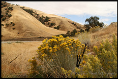 Rolling Golden Hills (redhatgal ~ Barbara Butler/FireCreek Photography) Tags: ca secretspot interstate5 blueribbonwinner abovethevalley bakesfield redhatgal kerncountyphotographers