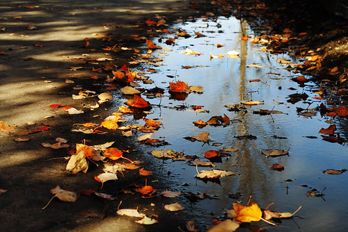 Fall Reflections 4156
