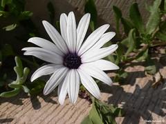 Flower - ???