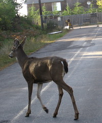 doe near cart'm