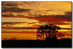 Sunset Silhouette (3) (Roger Lynn) Tags: autumn trees sunset sky fall colors silhouette clouds moscow idaho universityofidaho palouse featuredinexplore aplusphoto