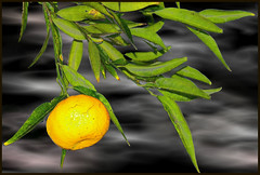 Tangerine dream (Nespyxel) Tags: orange nature tangerine clouds nuvole natura arancio mandarino challengeyouwinner aplusphoto nespyxel stefanoscarselli pleasedontusethisimageonwebsites blogsorothermediawithoutmyexplicitpermissionallrightsreserved