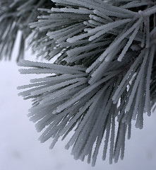 frost II (fotographyfun) Tags: snow tree pine 50mm frost december iowa needles pella hoarfost xti