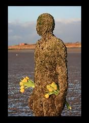 Crosby Beach 031 (cabirchall) Tags: beach statue tulips gormley crosby anotherplace gapc