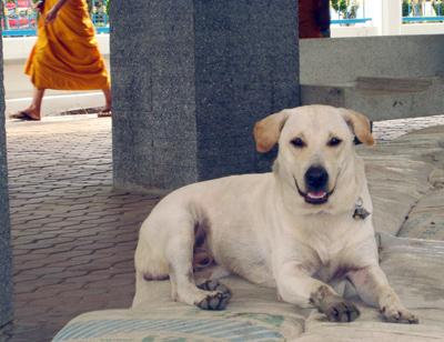 whitedog1