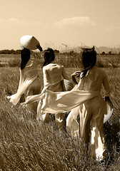 Tradition (Su Inc) Tags: portrait white black girl field hat sepia landscape asia vietnamese rice wind paddy vietnam southeast conical aodai sonya100 photofaceoffwinner pfogold pfosilver fotocompetition fotocompetitionbronze fotocompetitionsilver fotocompetitiongold
