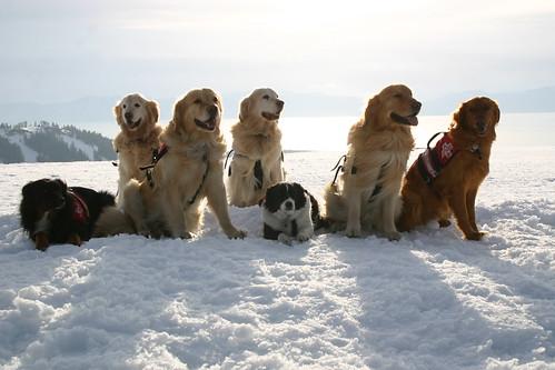 The Alpine Meadows Ski Patrol Rescue Dogs