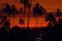 Polynsie - Tahiti (laurentp_ap) Tags: travel rainbow coconut pickup folklore danse isle nuit pirogue papeete polynesian vgtation tahitian heiva laurentphilippe agitationpassagre aplp91