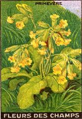 fleurs des champs 9