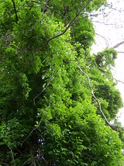 Quigleys Castle - Eureka Springs, Arkansas (Adventurer Dustin Holmes) Tags: trees tree leaves tour ar arkansas ark ozarks touristattraction touristattractions eurekasprings eurekaspring quigleycastle quigleyscastle