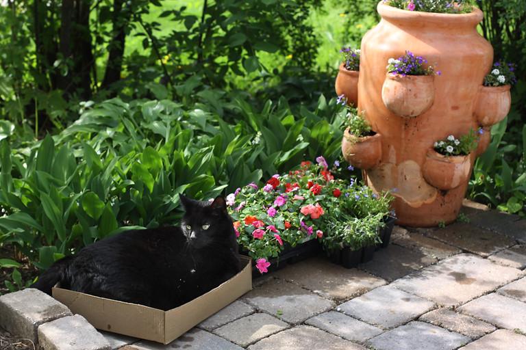 floral arranger