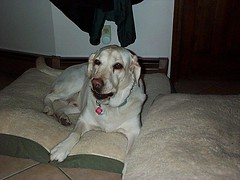 Jake (frank_bory) Tags: dogs jake rudy kelly deanna tonka lakota arby