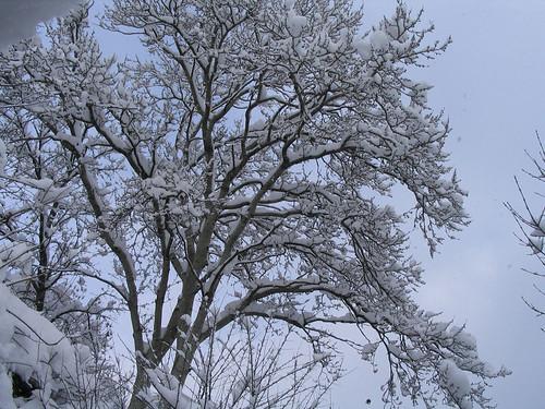 снег-032