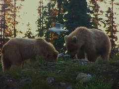 bear cubs (Leaca's Philosophy) Tags: alaska fun photography faith leaca photofaceoffwinner thechallengegame challengegamewinner pfogold alaskagrizzlybears leacasphilosophy