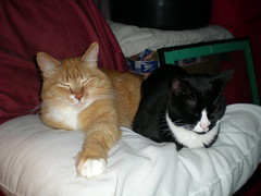 Buddies (Linda has HOPE) Tags: cats rocky phoebe