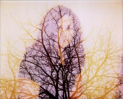 12/19/2007 (revivify) Tags: me polaroid doubleexposure branches spectra apolaroidaday