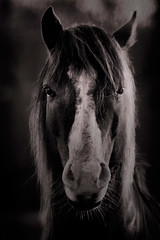 personified (slight clutter) Tags: portrait horse animal texas head iloveflickr mane loh slightclutter katyahorner slightclutterphotography