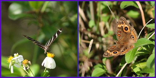 Fire Prairie Trail Butterflies
