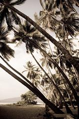 ke´ei (Paula Marina) Tags: usa praia beach hawaii fineart palmtrees bigisland hawaian aloha havaiana coqueiros havaí hawaiiana keei 'gettyvacation2010' paulamarina© pmcollection2011