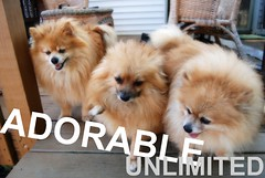 ADORABLE UNLIMITED