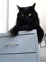 Huggy Bear on the metal drawers