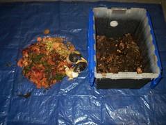 100_1476.JPG (elooto) Tags: worm composting