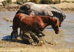 Bjelasica Horses (cokanj) Tags: horses tourism rural europe balkans montenegro bjelasica turizam 5photosaday discoveryphotos vugdelic marijavugdelic