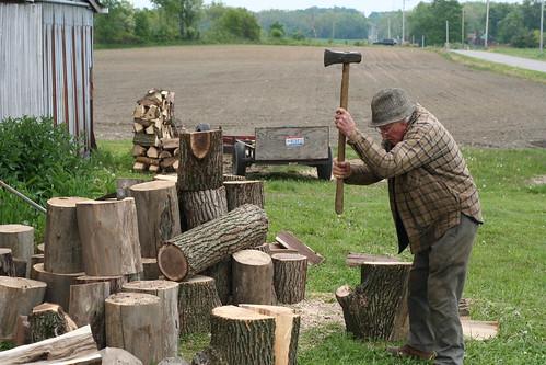 Shelby - Hettinger Farm - Chopping Wood