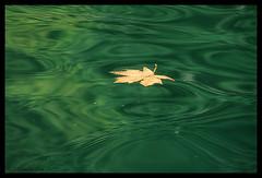 Adrift (Free 2 Be) Tags: ocean water leaf ripples 15challengeswinner thechallengegame challengegamewinner beautifulworldchallenges pregamewinner pregamechallenge