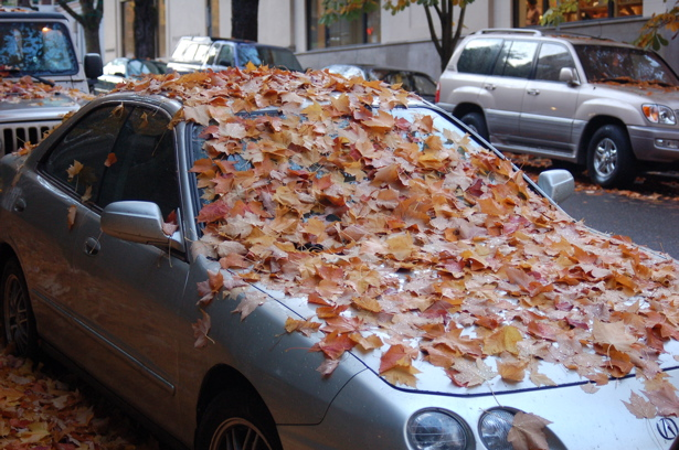 autumn_leaves_silvercar_hood