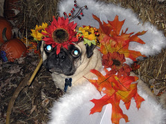 norman halloween