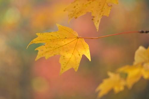Fall Light 5