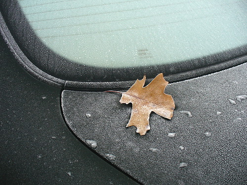 Frosted window with leaf