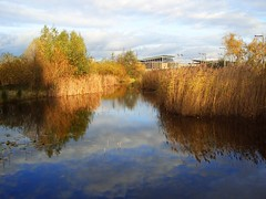 Ecological Park, Greenwich Peninsula