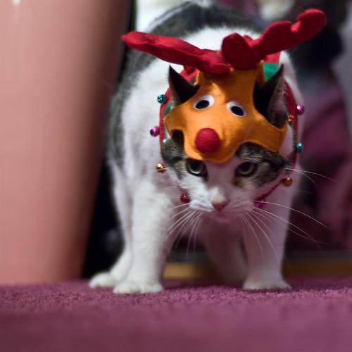 Angry Rudolf