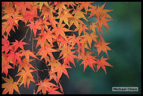 嵐山_20071124_150957_(1426)