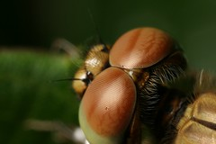 IMG_2053 (yimING_) Tags: flower macro nature singapore insects chinesegarden canonmpe65