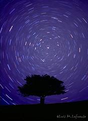 Estrella Polar y circumpolares