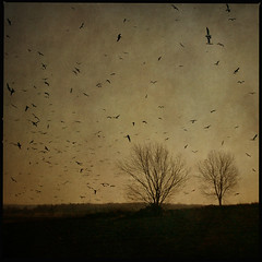 evening light (anders mrtsell) Tags: trees light sunset tree birds sepia square evening artistic expression rebro palabra themoulinrouge bsquare artisticexpression golddragon artlibre goldenphotographer diamondclassphotographer flickrdiamond impressivemood thegardenofzen thegoldendreams goldstaraward storamellsa thankspaulgrandforbirds goldenvisions